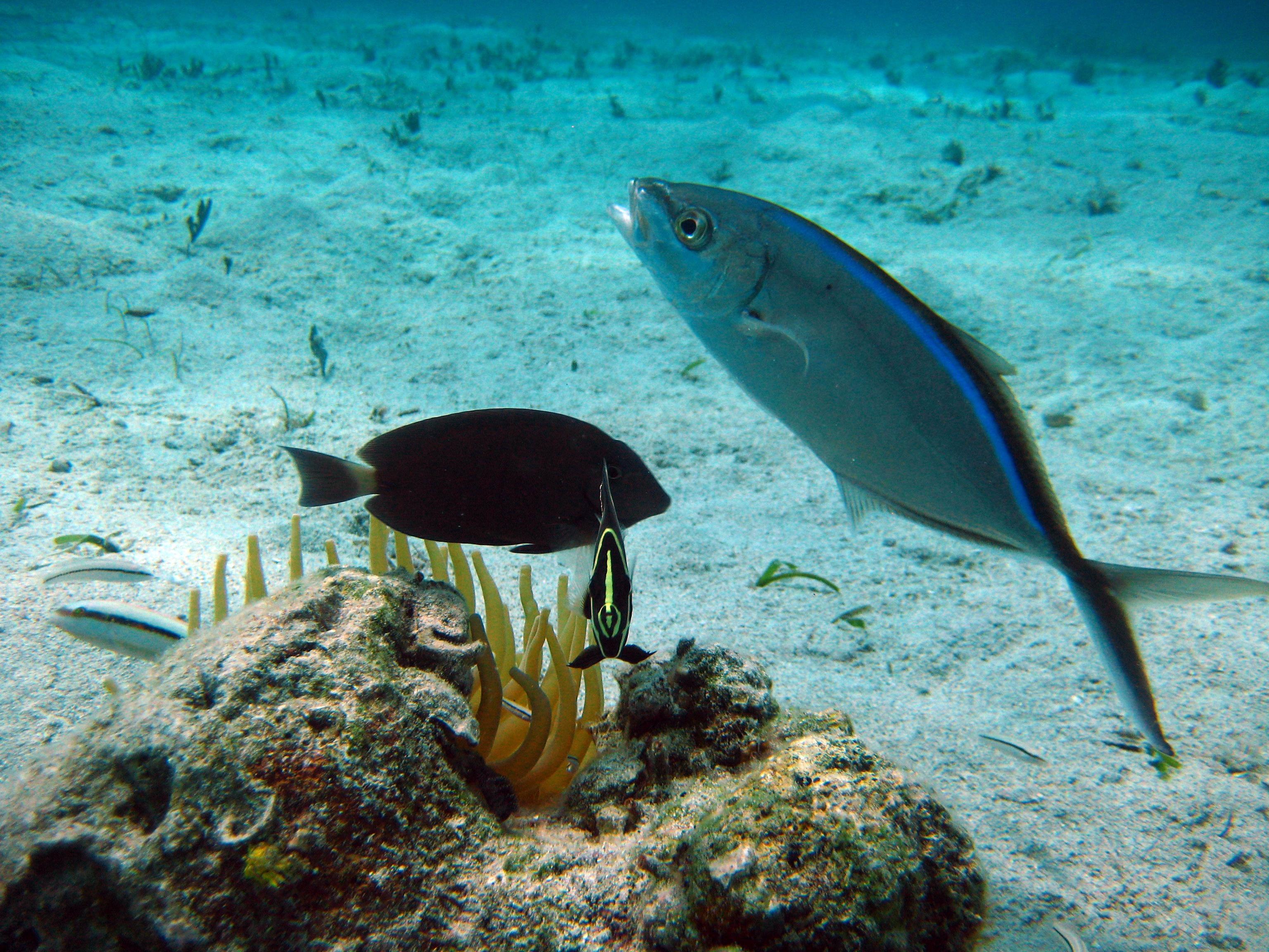 Virgin Island Snorkeling