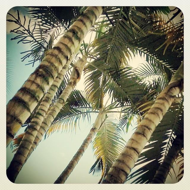 Feeling Tropical.